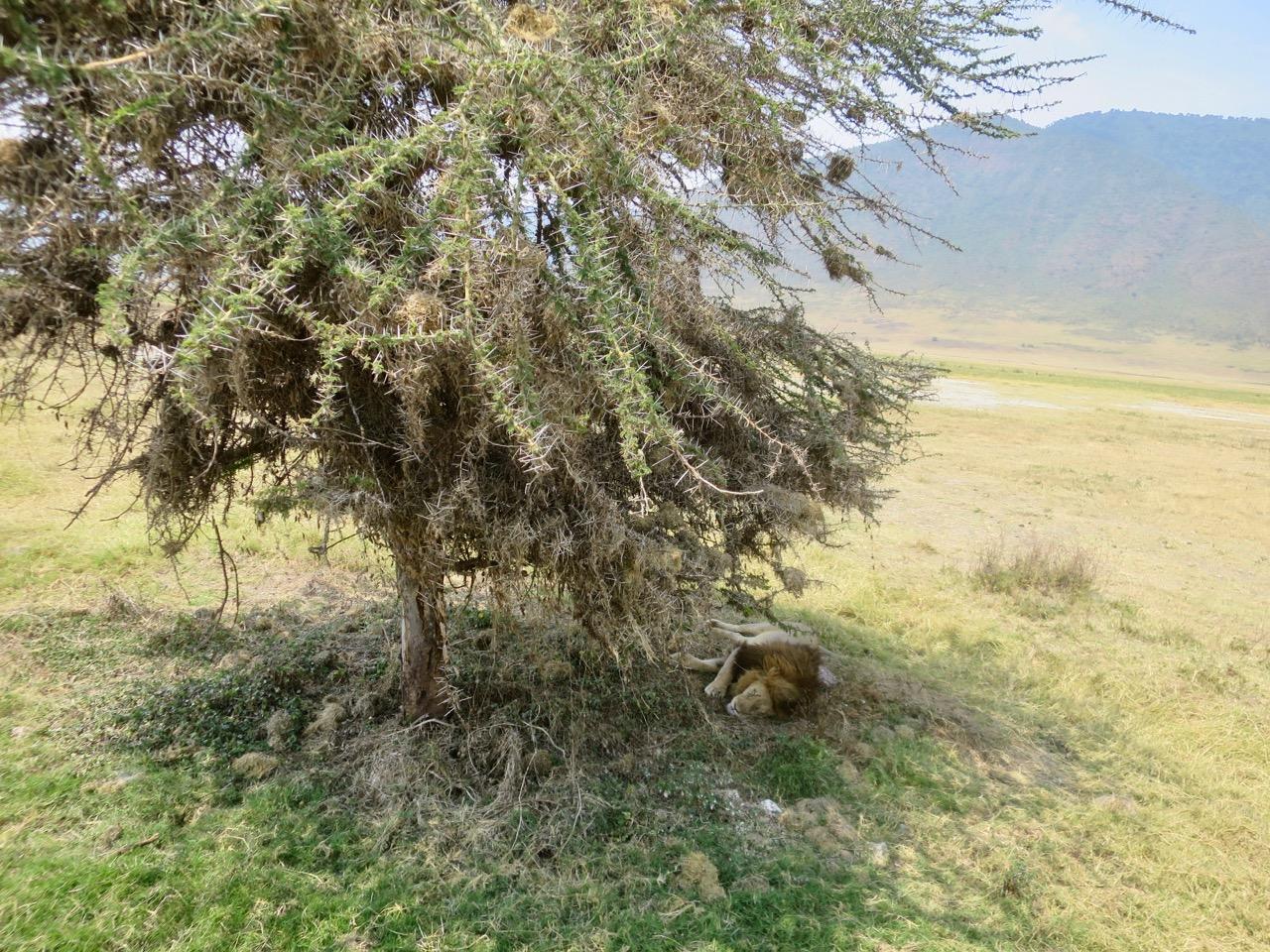 Ngorongoro 1 33