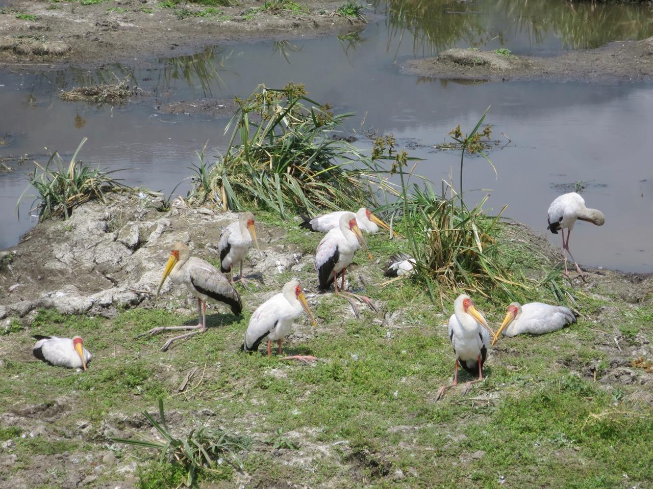 Ngorongoro 1 34