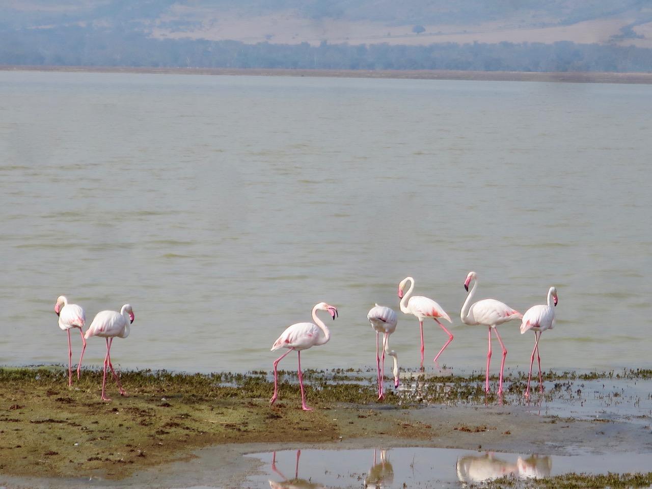 Ngorongoro 1 35