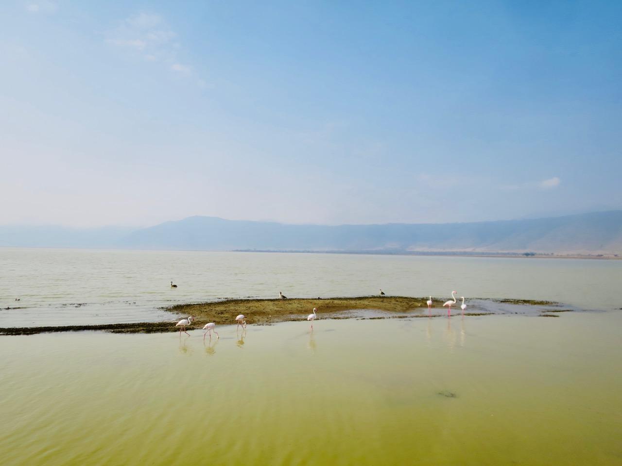 Ngorongoro 1 36