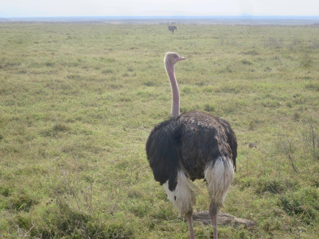 Ngorongoro 1 37