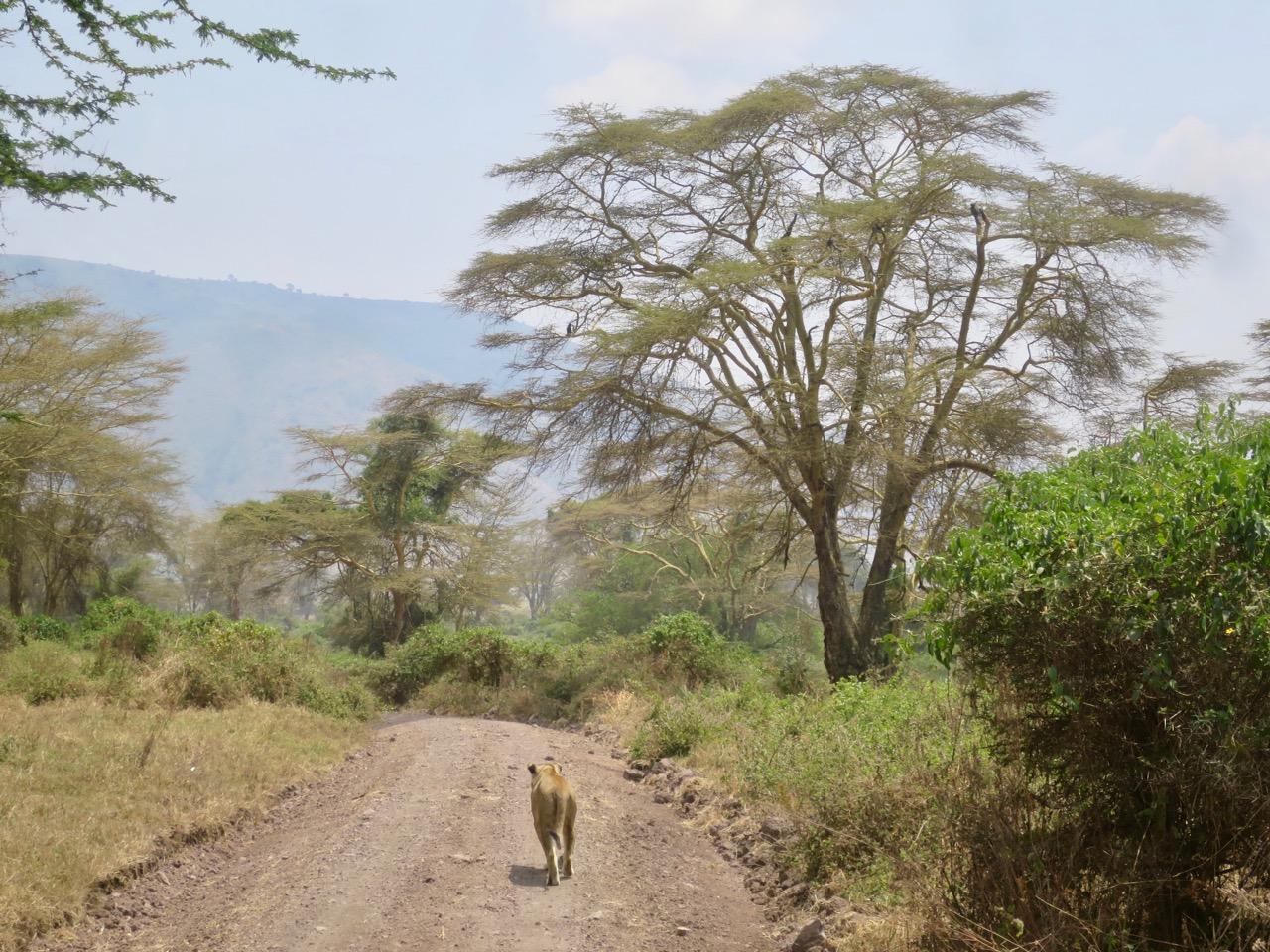 Ngorongoro 1 39