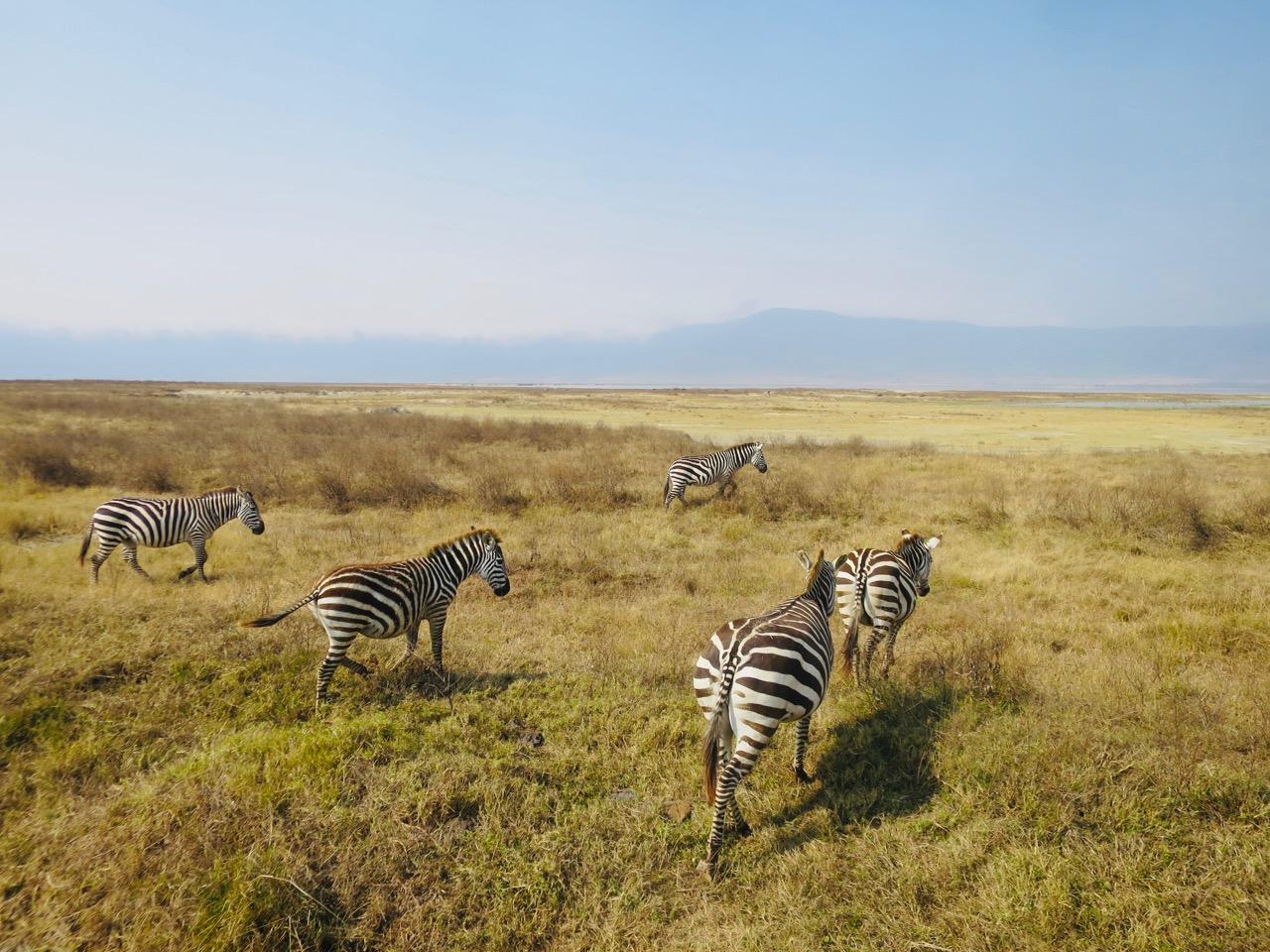Ngorongoro 1 42