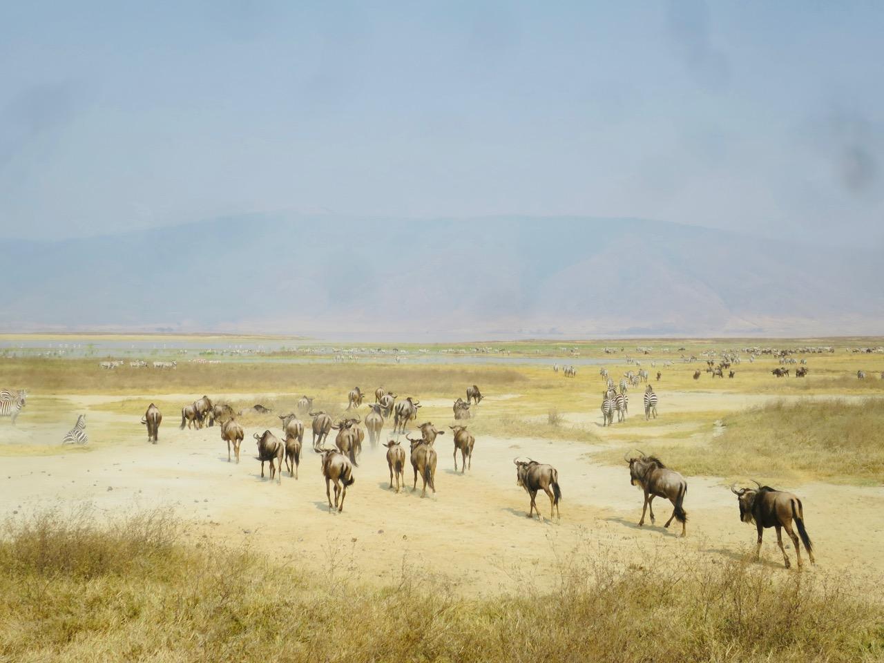 Ngorongoro 1 43