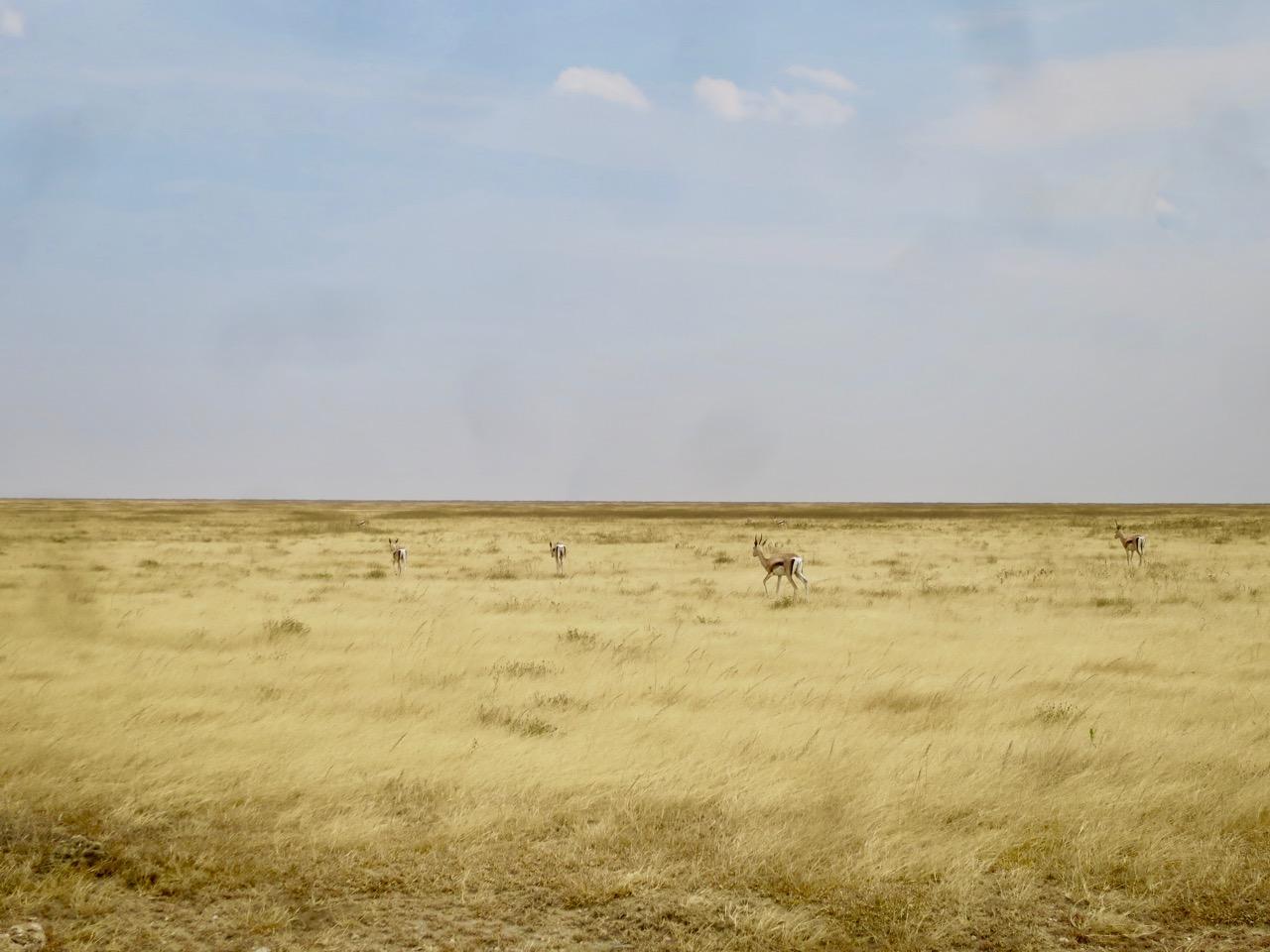 Serengeti 1 05