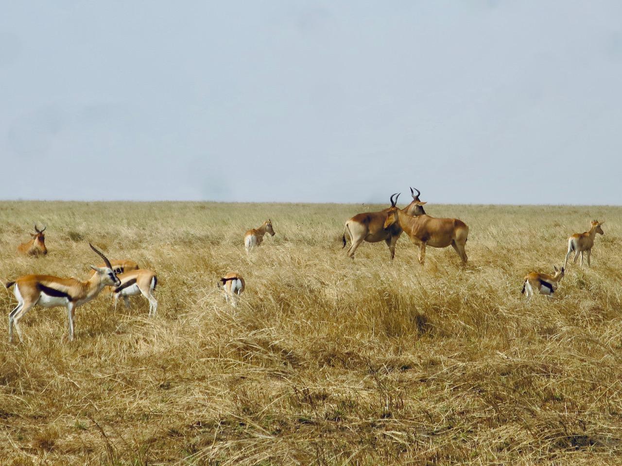 Serengeti 1 06