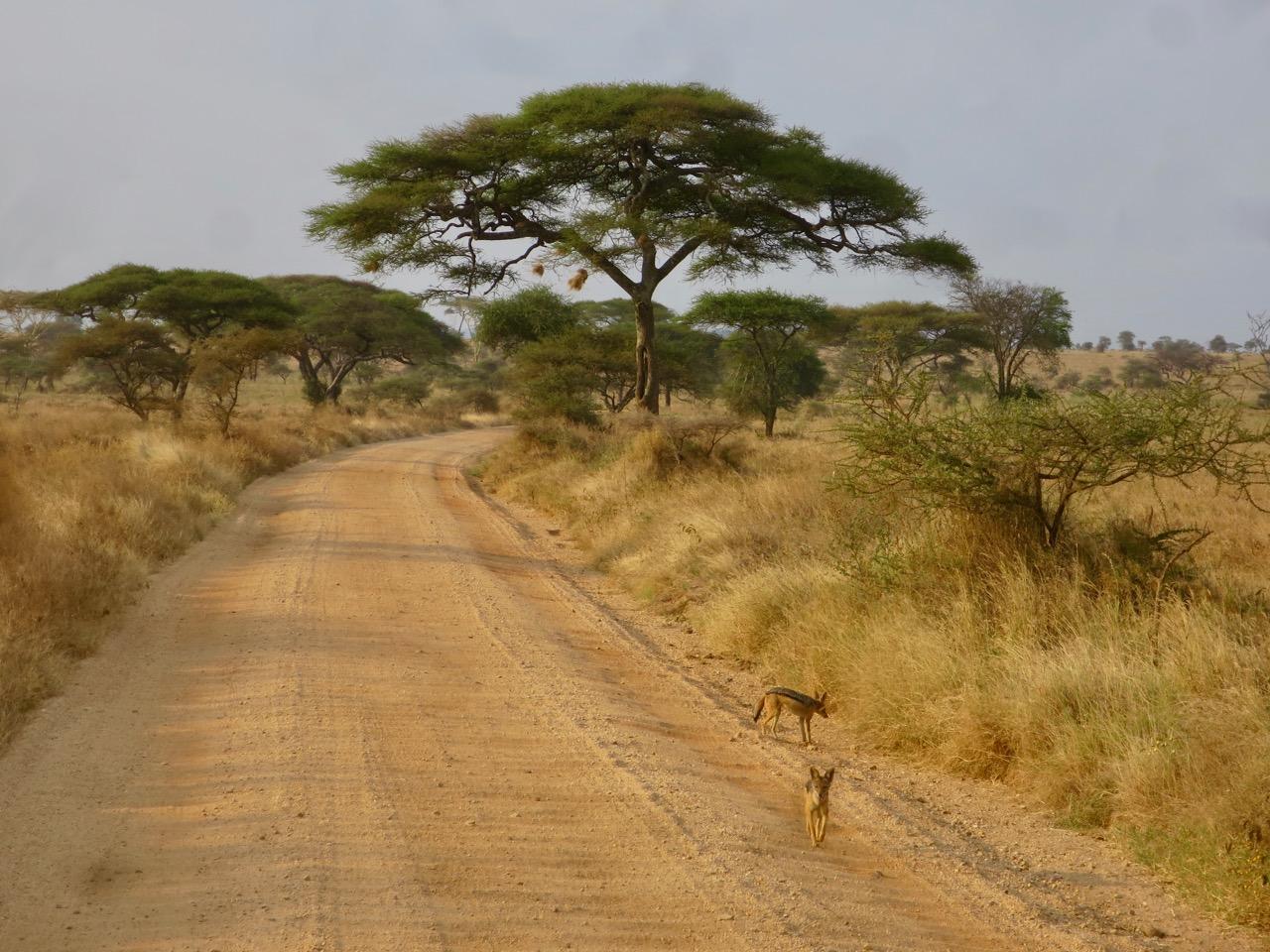 Serengeti 1 07