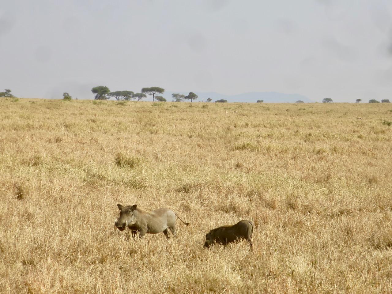 Serengeti 1 09b
