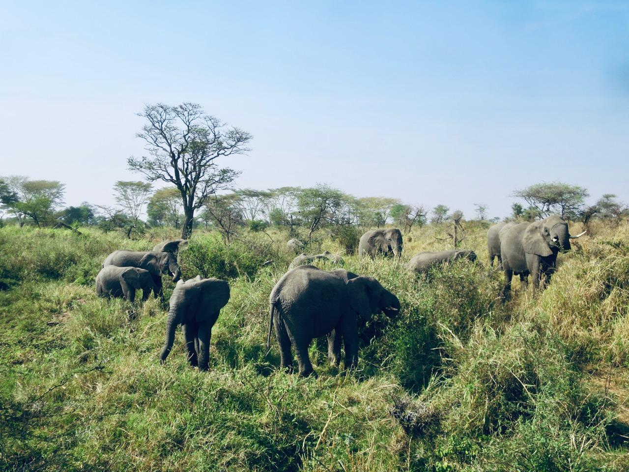 Serengeti 1 10b