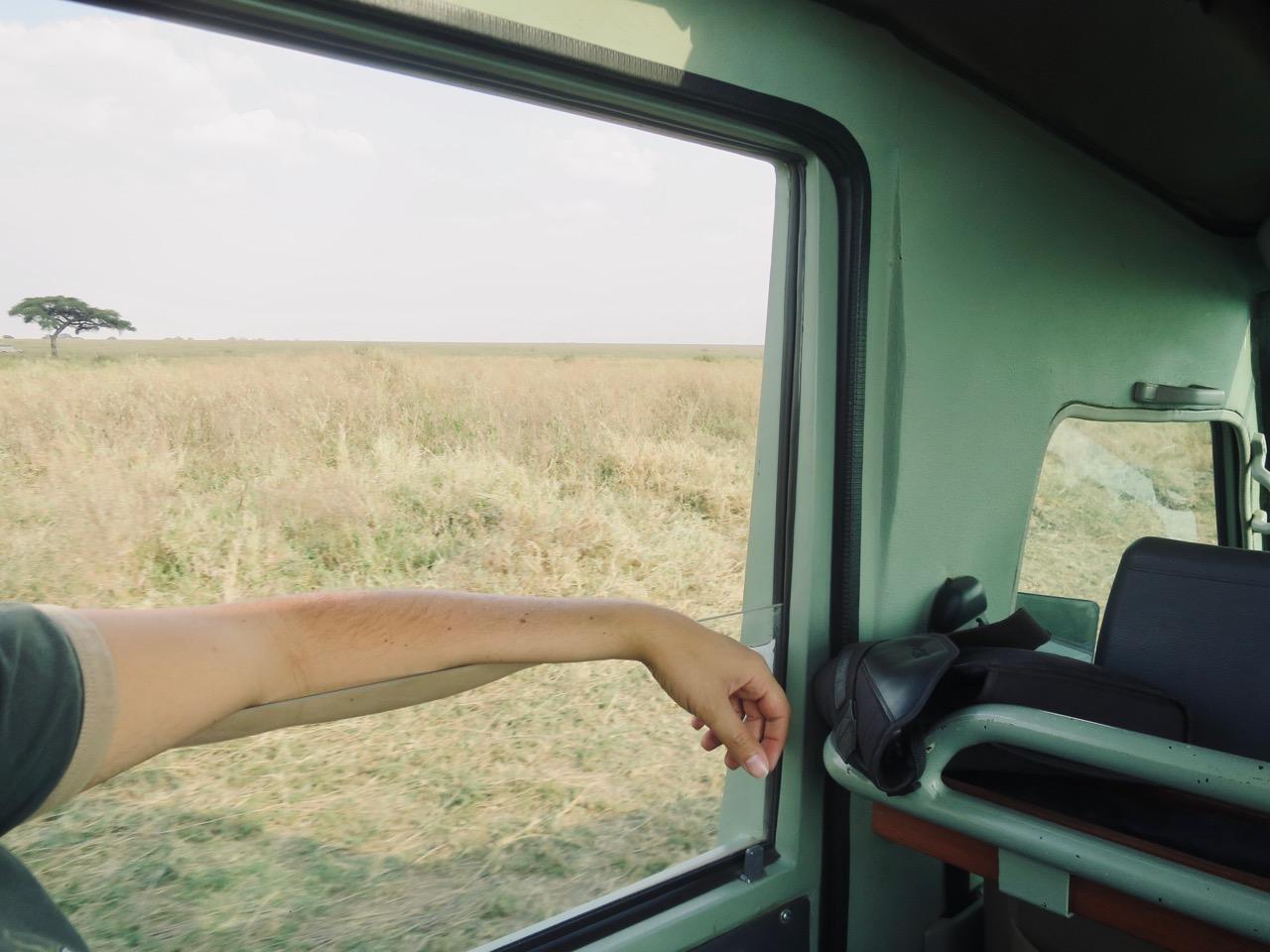 Serengeti 1 12