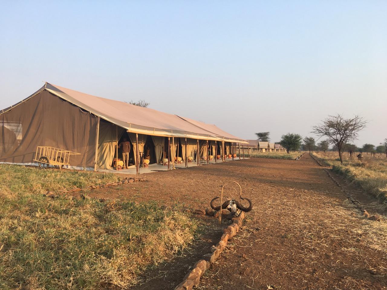 Serengeti 1 13