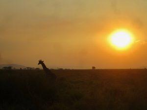 Serengeti 1 14