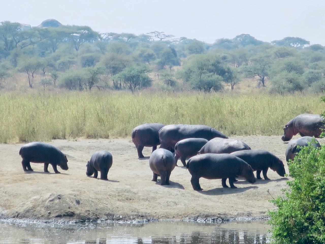 Serengeti 1 18