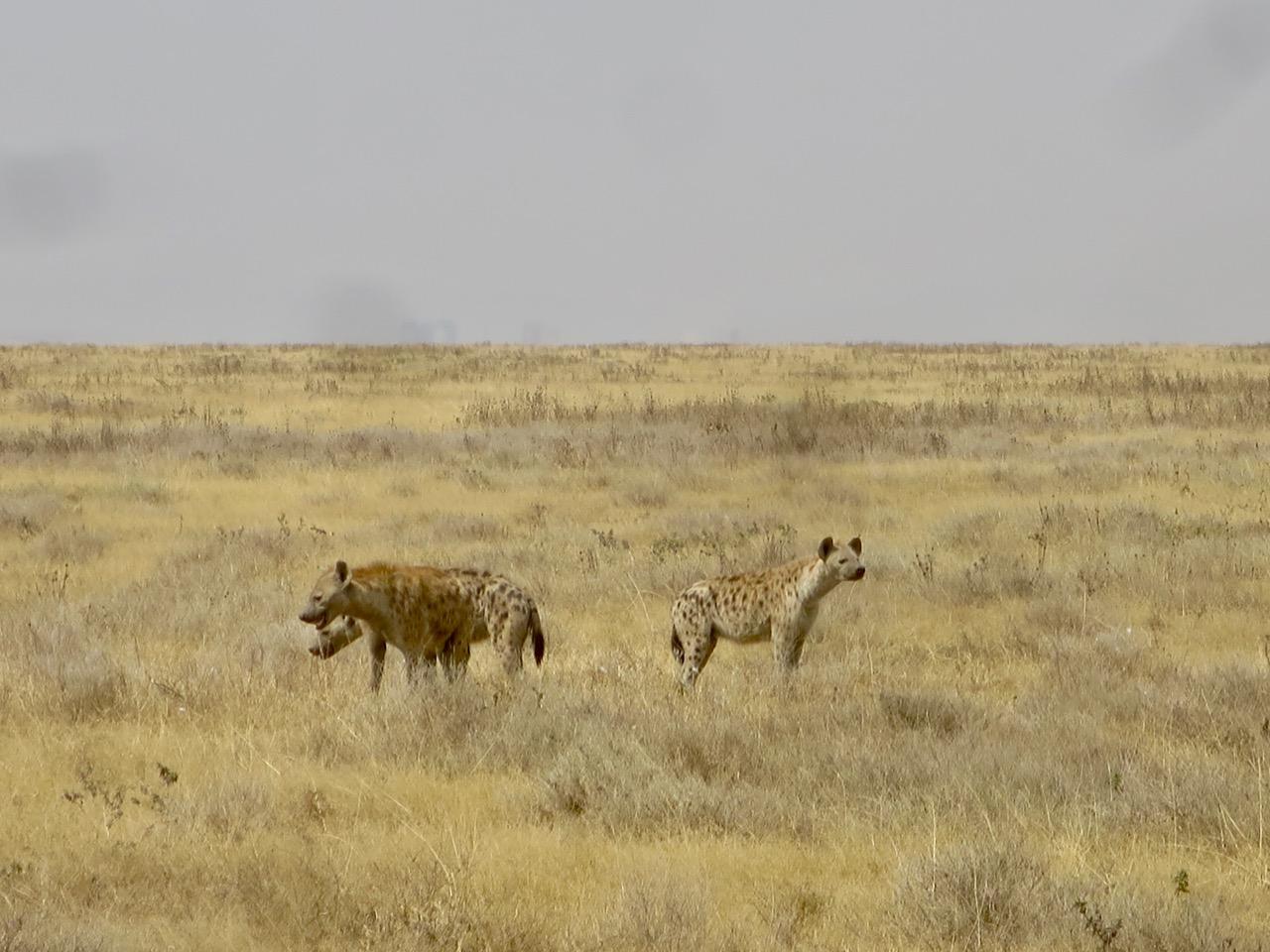 Serengeti 1 23
