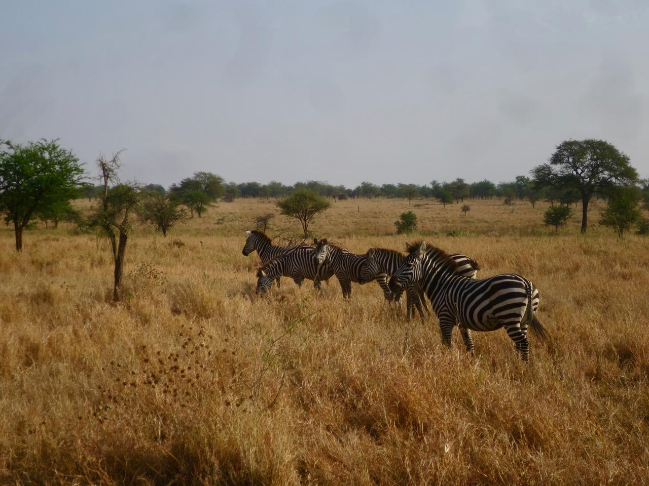 Serengeti 1 24