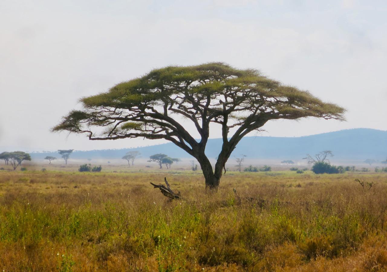 Serengeti 1 25