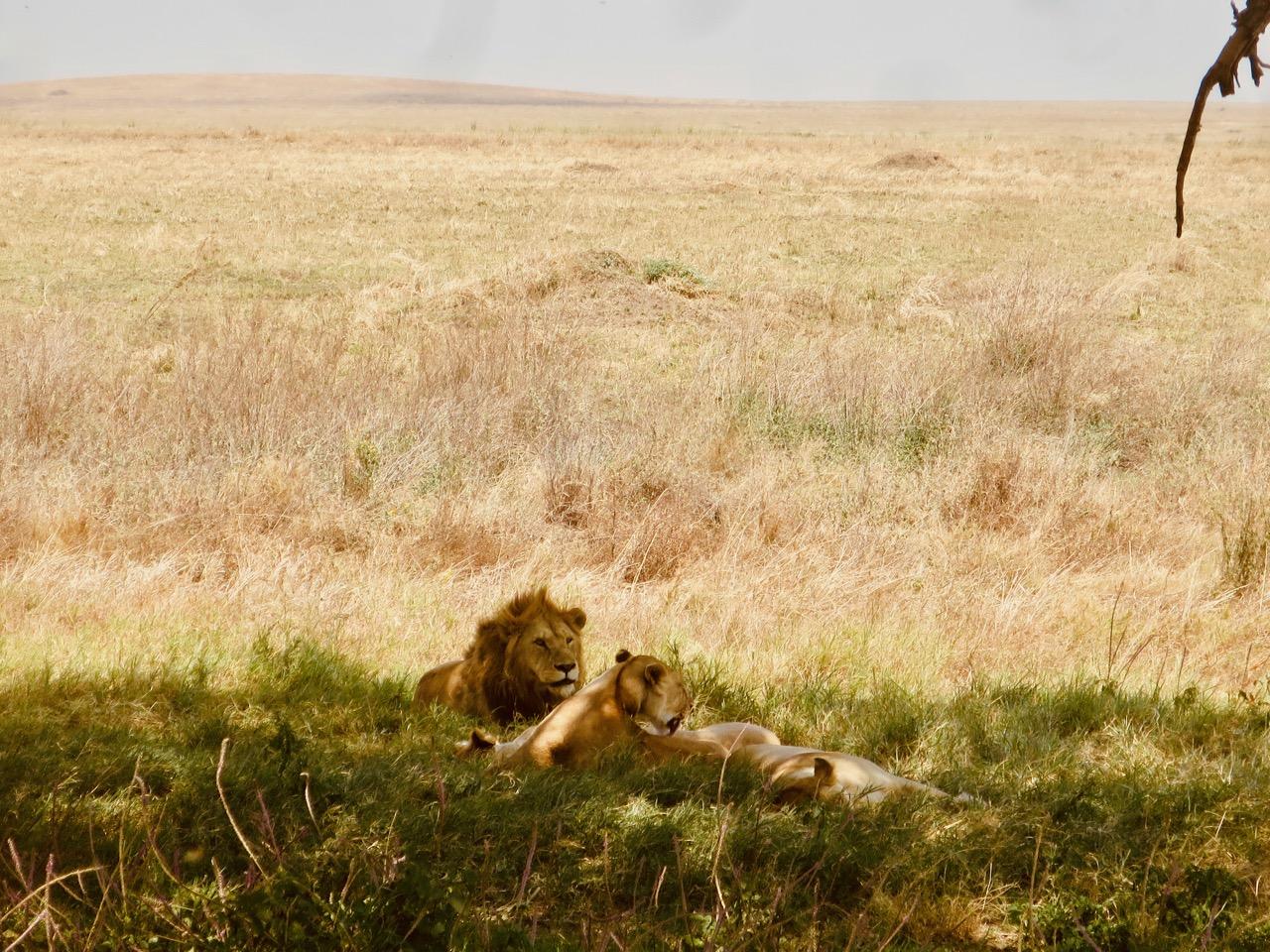 Serengeti 1 26b
