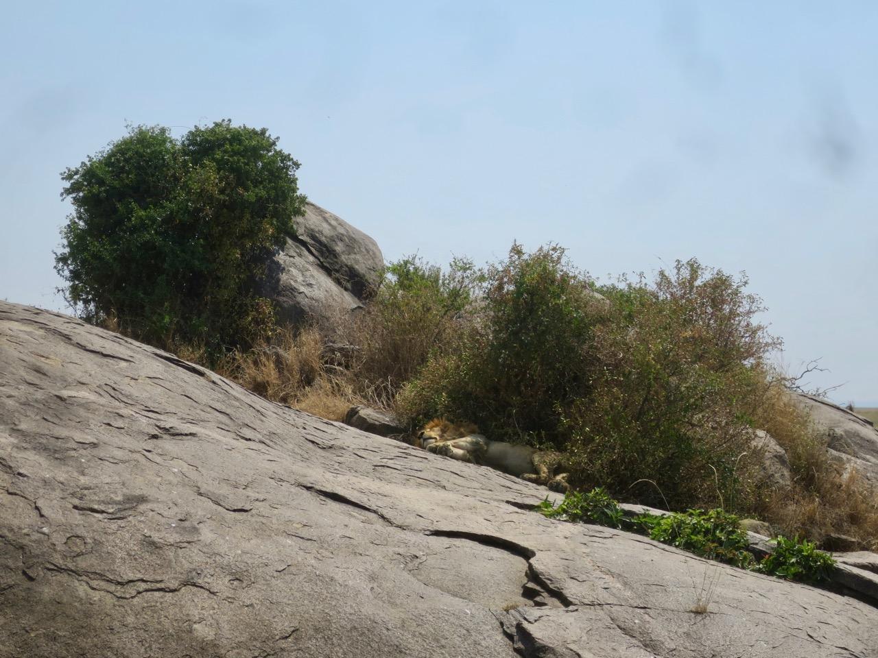 Serengeti 1 27b