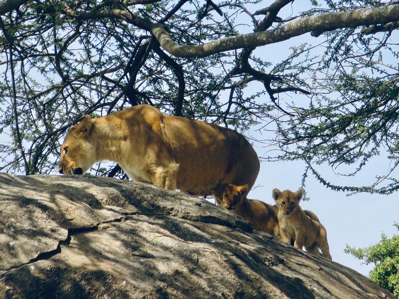 Serengeti 1 29