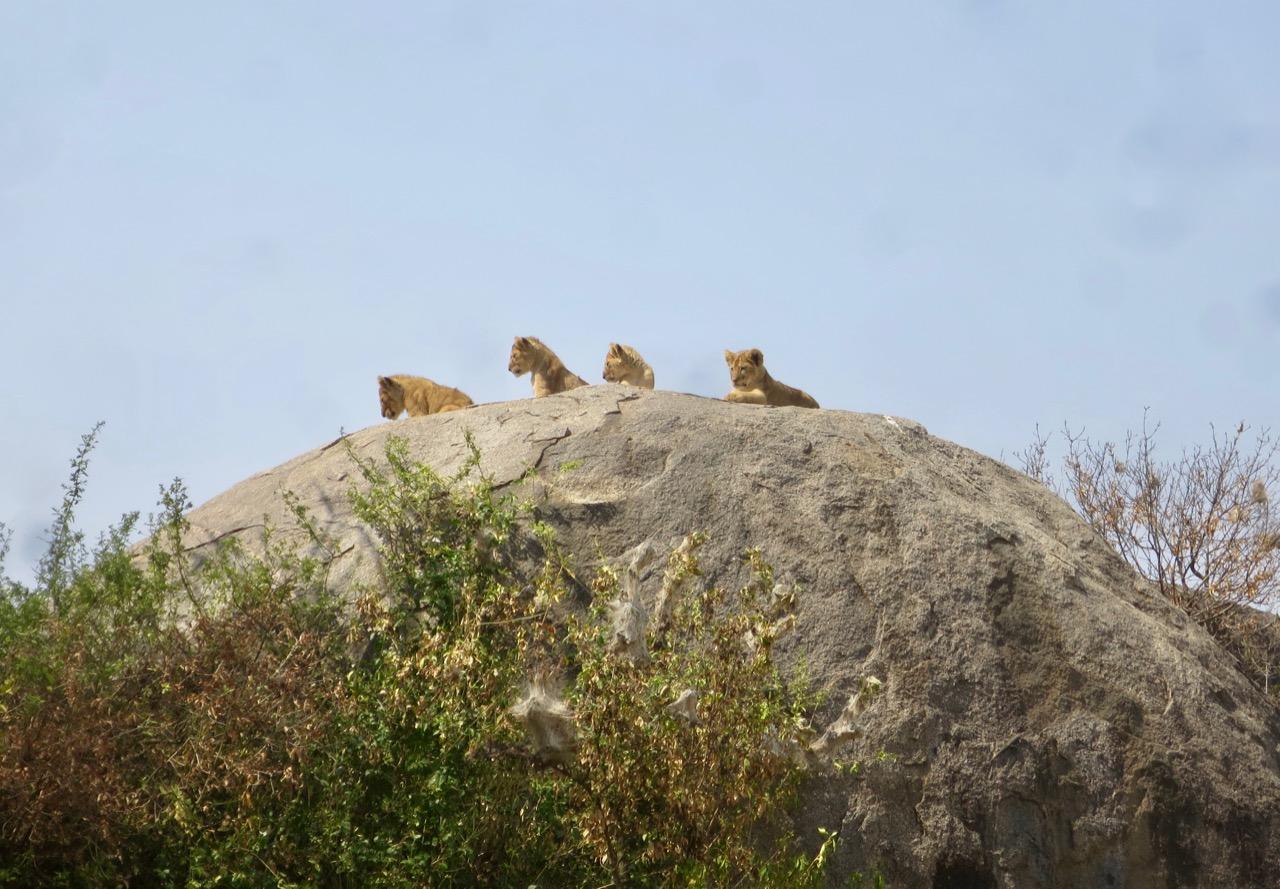 Serengeti 1 30