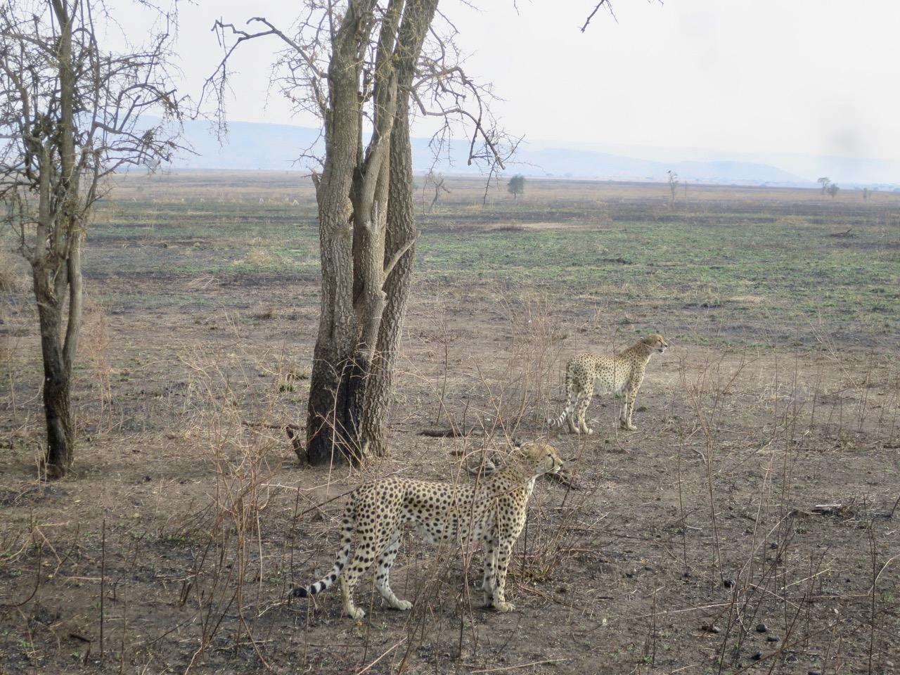 Serengeti 1 32