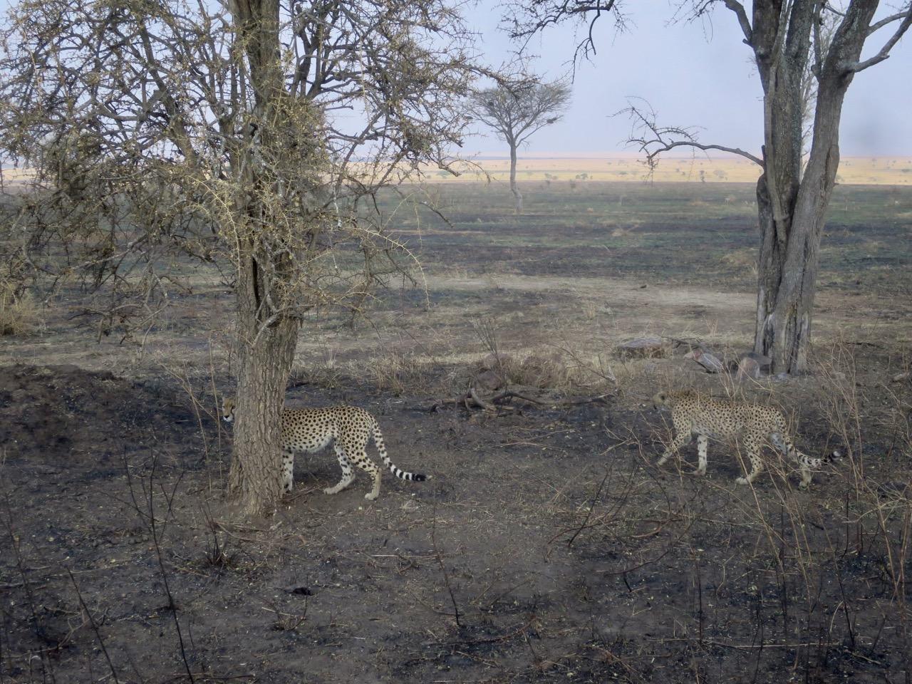 Serengeti 1 33