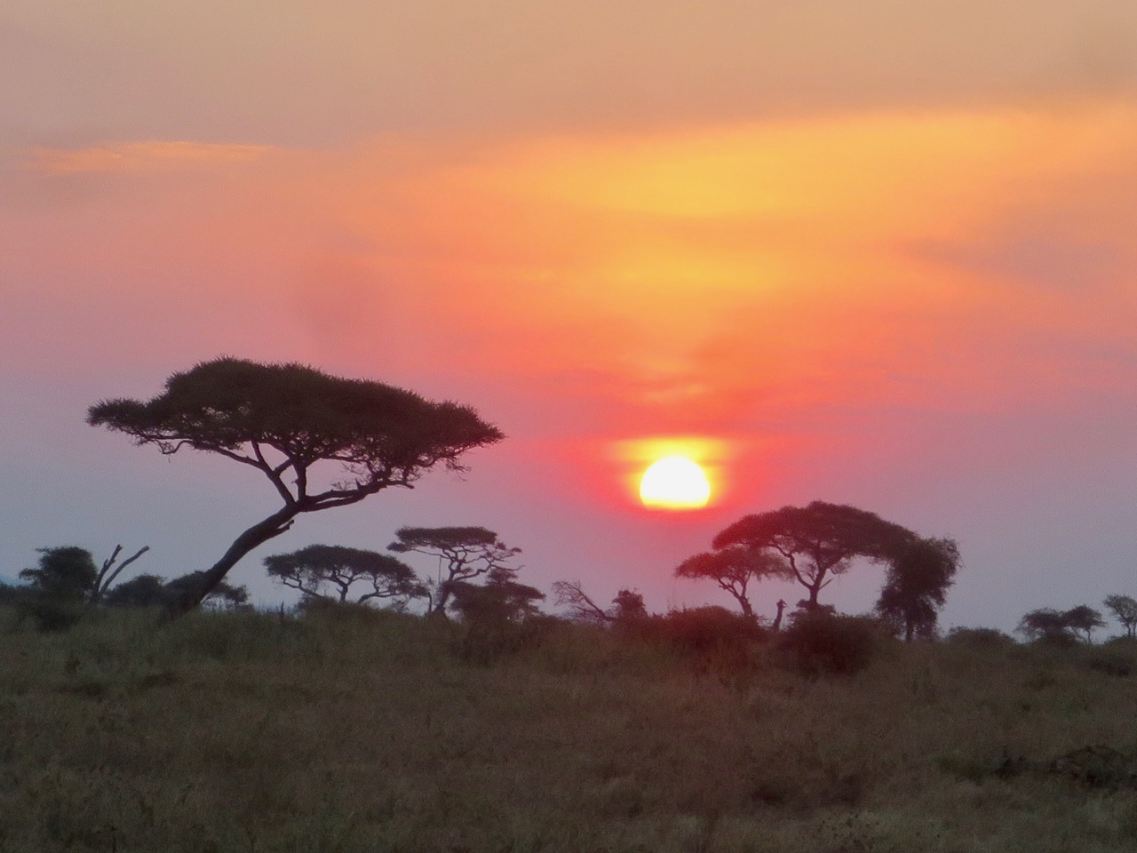 Serengeti 1 35