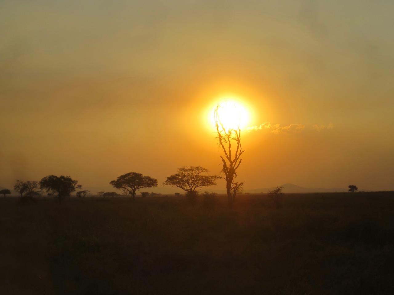 Serengeti 1 37