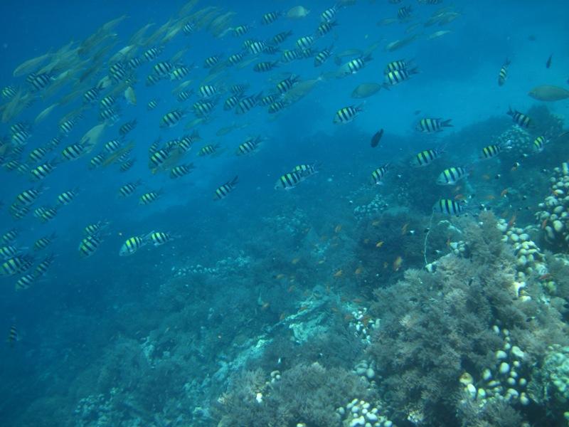 Zanzibar snorkel