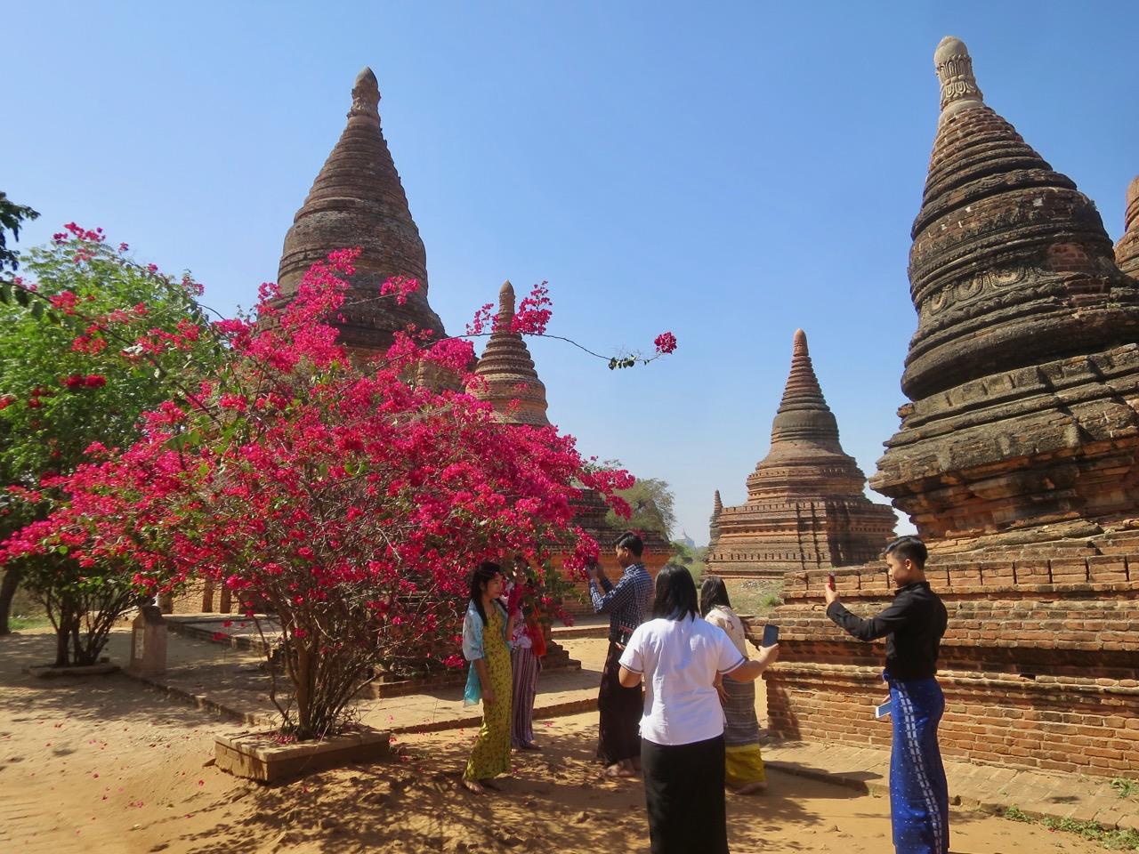 Flores em Bagan