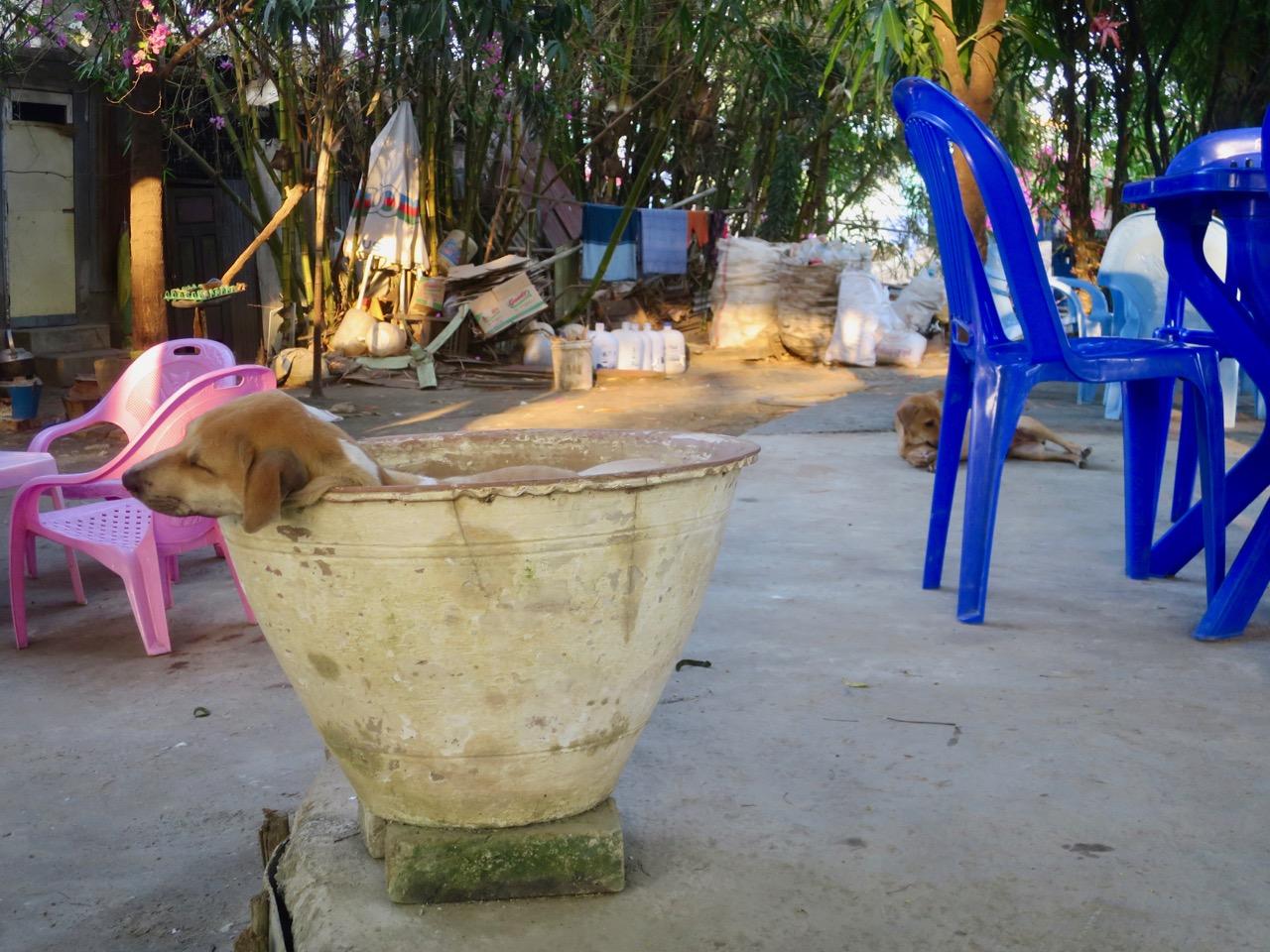 Culinaria birmanesa 1 09