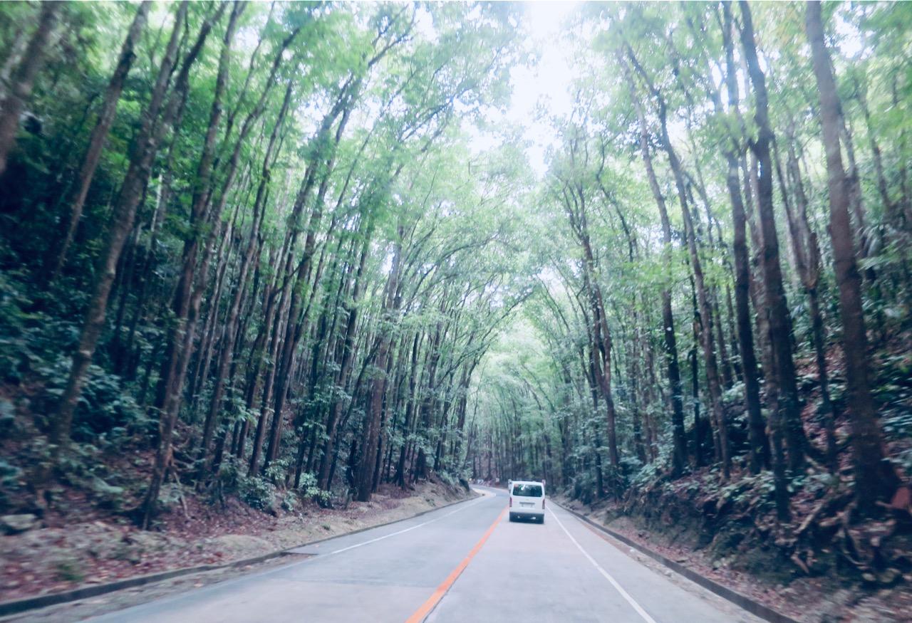 A dita Floresta feita pelo Homem em Bohol