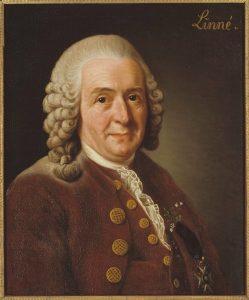 Carl von Linne 1707 1778 botanist professor Alexander Roslin Nationalmuseum 15723.tif