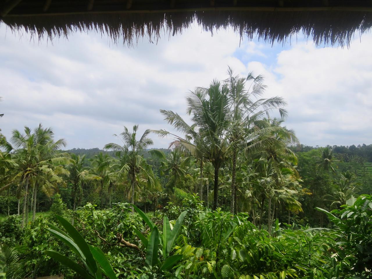 Bali 3 25